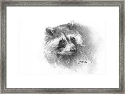 Bandit The Raccoon Framed Print
