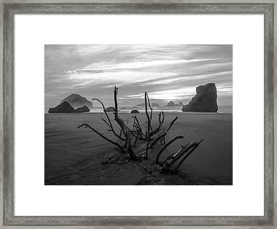 Bandon Beach Tree Framed Print