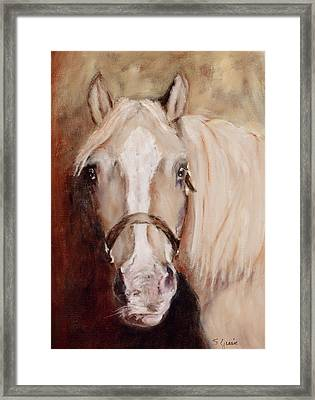 Banjo Framed Print by Shirley Quaid