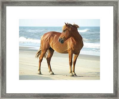 Banker Horse - 5 Framed Print