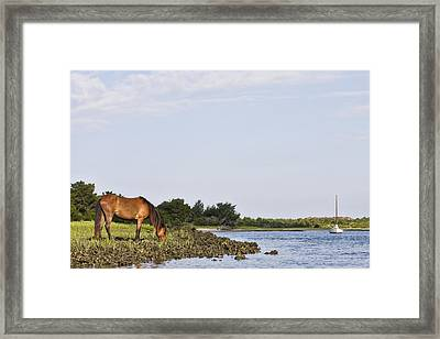 Framed Print featuring the photograph Banker Horse Along Taylors Creek by Bob Decker