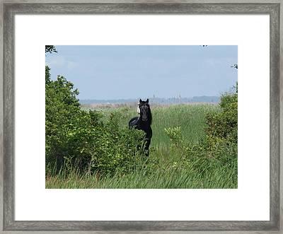 Banker Horse And Egret - Landscape Framed Print