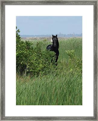 Banker Horse And Egret - Portrait Framed Print