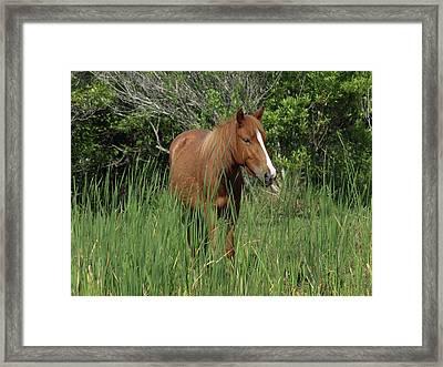 Banker Horses - 10 Framed Print