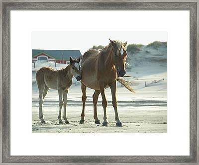 Banker Horses - 3 Framed Print