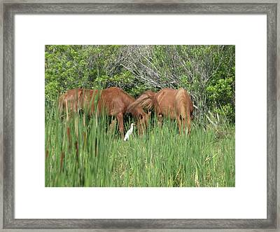 Banker Horses And Egret Framed Print