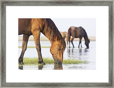 Banker Horses On Tidal Flat Framed Print by Bob Decker