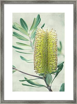 Framed Print featuring the photograph Banksia by Linda Lees