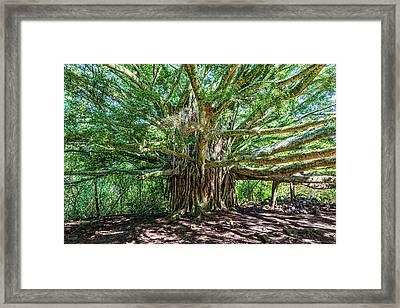 Banyan Beauty Framed Print by Kelley King