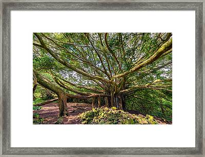 Banyan Framed Print