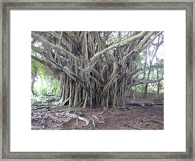 Banyan Framed Print by Ron Smith