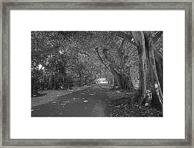 Banyan Street 2 Framed Print by HH Photography of Florida