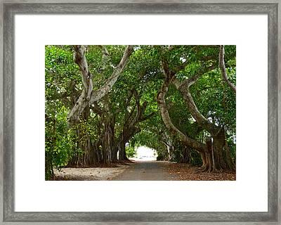Banyan Street Framed Print