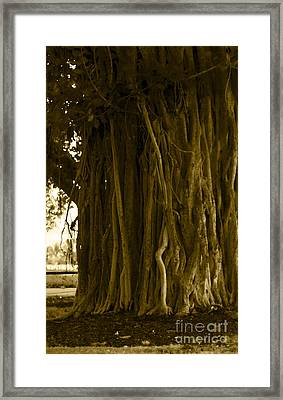 Banyan Surfer - Triptych  Part 1 Of 3 Framed Print by Sean Davey