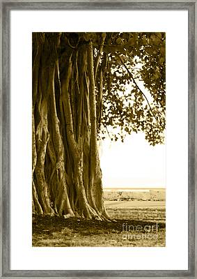 Banyan Surfer - Triptych  Part 2 Of 3 Framed Print by Sean Davey