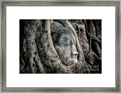 Banyan Tree Buddha Framed Print by Adrian Evans