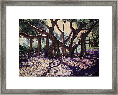 Banyan Tree On Old Cutler Road Framed Print by Stephen Mack