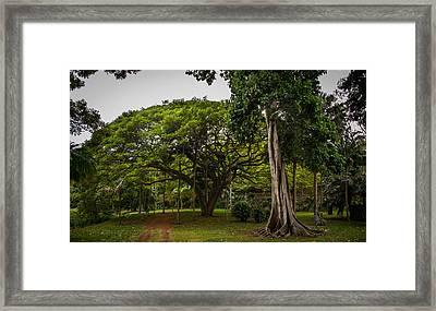 Banyon Monkeypod Landscape I Framed Print by Sharin Gabl