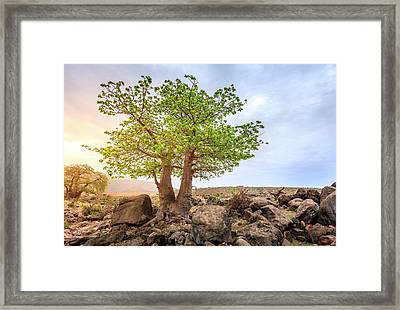 Framed Print featuring the photograph Baobab Tree by Alexey Stiop