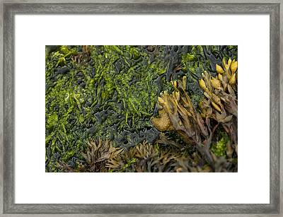 Framed Print featuring the photograph Bar Harbor Maine Coastal Life by Kevin Blackburn