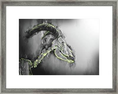 Barbary Skeleton Sheep Art - Goat Art - Antelope Wall Art Framed Print by Aota Artist