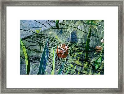 Barbed Vine Framed Print by Nancy  Ethiel