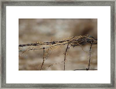 Barbed Wire Entwined With Dried Vine In Autumn Framed Print