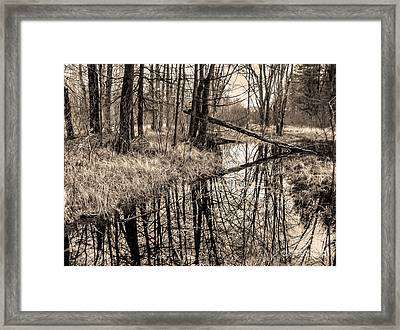 Framed Print featuring the photograph Bare Bones by Betsy Zimmerli