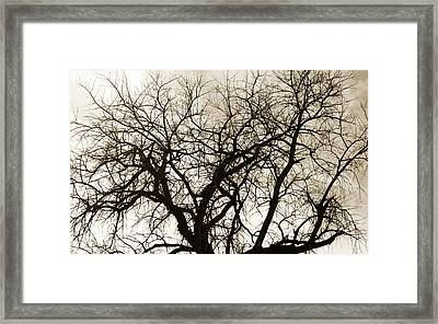 Bare Branches Framed Print by Marilyn Hunt