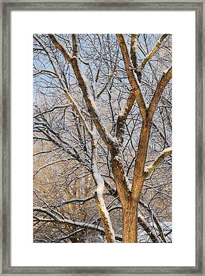 Bare Branches Framed Print by Trudi Southerland