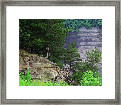 Bare Roots Framed Print