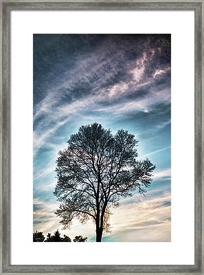 Bare Sunset Framed Print