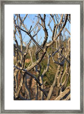 Bare The Beauty Framed Print