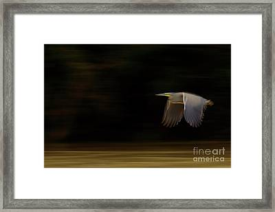 Bare-throated Tiger-heron Blur Framed Print
