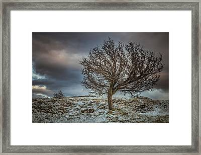 Bare Tree Against A Winter Sunset Framed Print