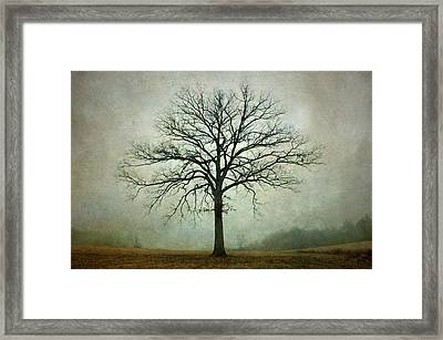 Bare Tree And Fog Framed Print