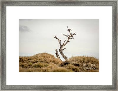 Bare Tree Framed Print by Bernard Jaubert