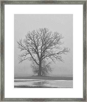 Bare Tree In Fog Framed Print by Nancy Landry