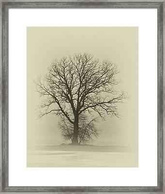 Bare Tree In Fog- Nik Filter Framed Print by Nancy Landry