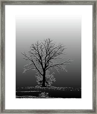 Bare Tree In Fog- Pe Filter Framed Print by Nancy Landry