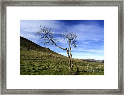 Bare Tree In The Mountain. Auvergne. France Framed Print