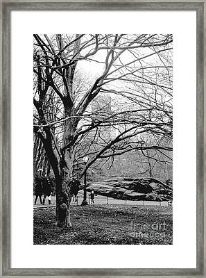 Framed Print featuring the photograph Bare Tree On Walking Path Bw by Sandy Moulder