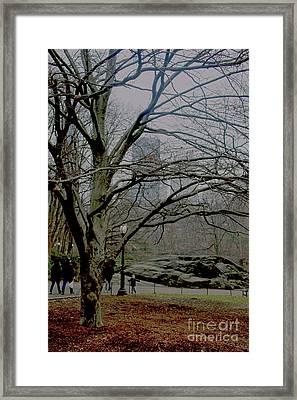 Bare Tree On Walking Path Framed Print by Sandy Moulder