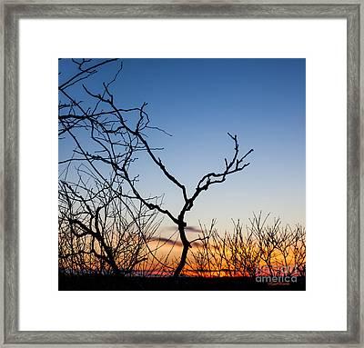 Bare Trees At Sunset Framed Print