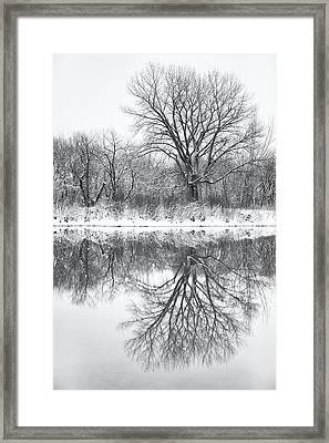 Framed Print featuring the photograph Bare Trees by Darren White