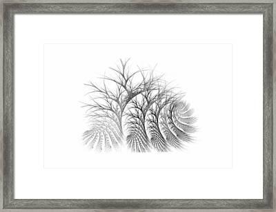 Bare Trees Daylight Framed Print