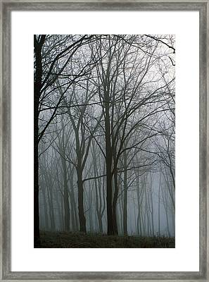 Bare Trees In Misty Forest, Finger Framed Print by Panoramic Images