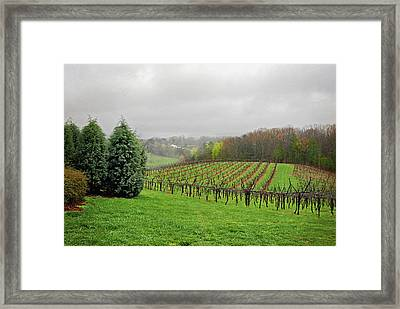 Bare Vineyard Framed Print