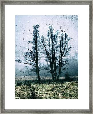 Bare Winter Trees Framed Print