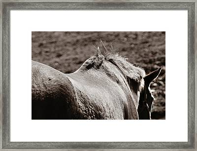Bareback Framed Print by Angela Rath